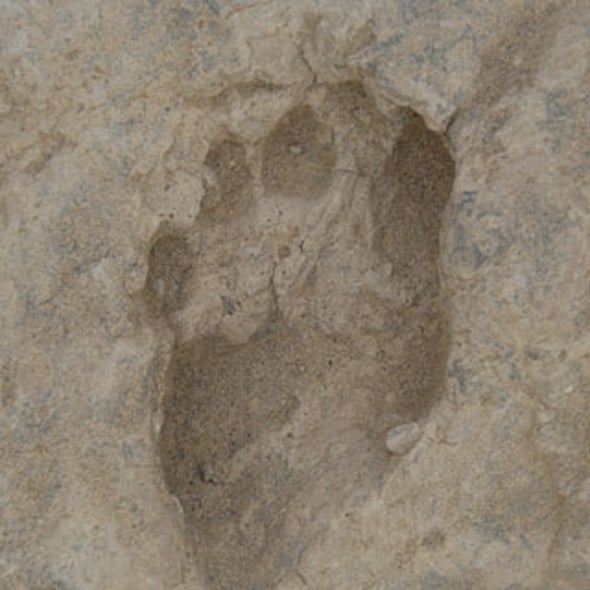 Researchers Uncover 1.5-Million-Year-Old Footprints