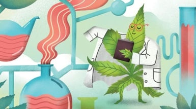 How Medical Marijuana's Chemicals May Protect Cells