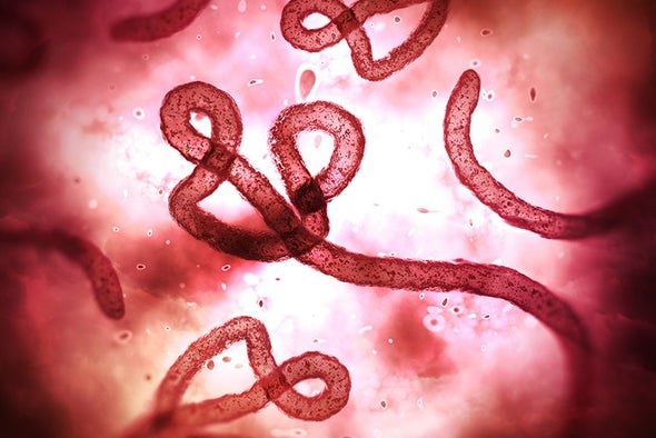 Ebola May Leave Survivors with Lasting Problems in Brain, Nerves
