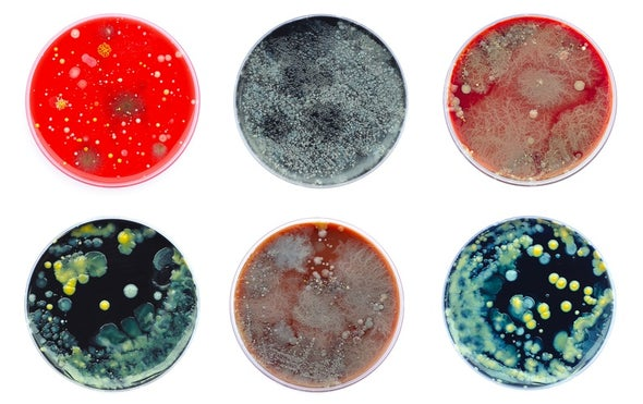 Culture Shock: Precious Microbe Collections Languish in Threatened Bio-Libraries