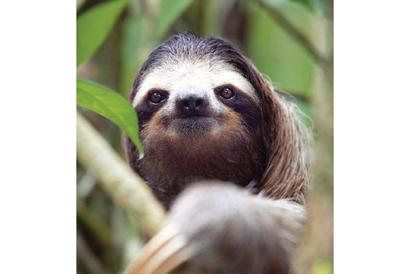 Image result for sloths