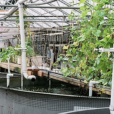 Angling for a Better Way to Farm Fish--And Vegetables, Too
