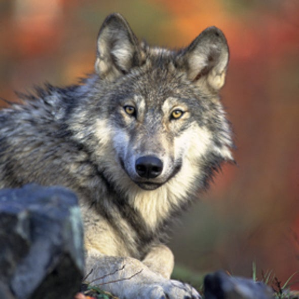 Living in a Landscape of Fear: How Predators Impact an Ecosystem