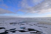 The Arctic Is Getting Crazy