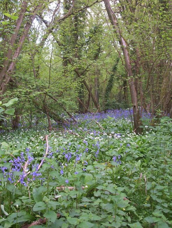 Track a Tree [U.K.]