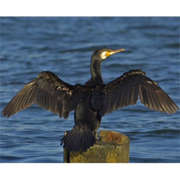 The Seabird Ecological Assessment Network (SEANET)