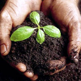 Soils Cannot Lock Away Black Carbon