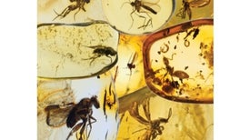 Mysterious Insect Fossil Gap Explained