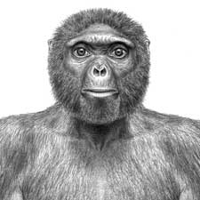 Long-Awaited Research on a 4.4-Million-Year-Old Hominid Sheds New ...
