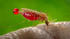 Medicine Nobel Recognizes Fights against Malaria and River Blindness
