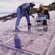 Snow Algae Absorb Greenhouse Gas