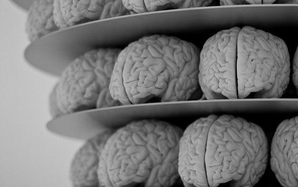 """Mini-Me"" Brains Mimic Disease, Raise Hope for Eventual Therapies"