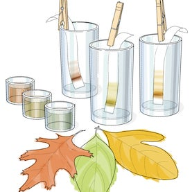 bring science home fall leaf color chemistry activity