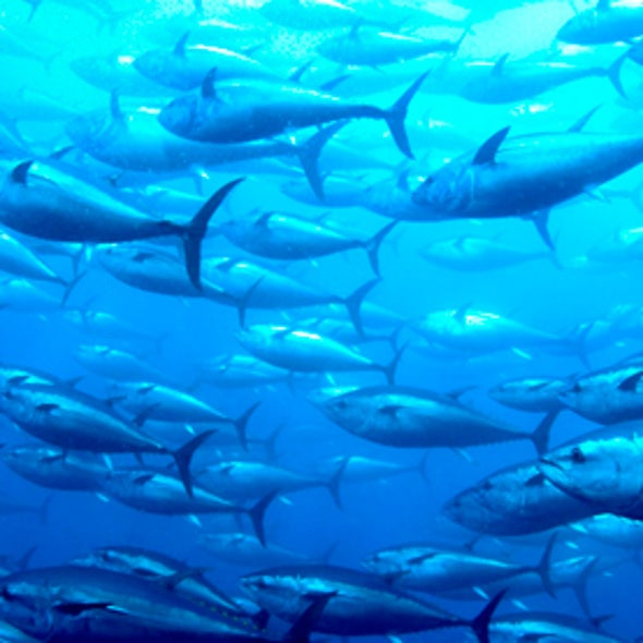 How Does Mercury Get Into Fish?