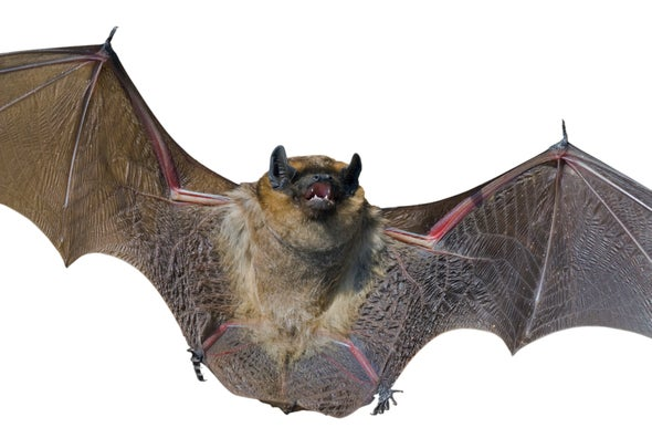 Bats Learn to Take White-Nose Punch