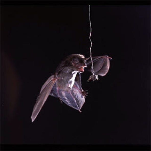 Moths Use Sonar-Jamming Defense to Fend Off Hunting Bats
