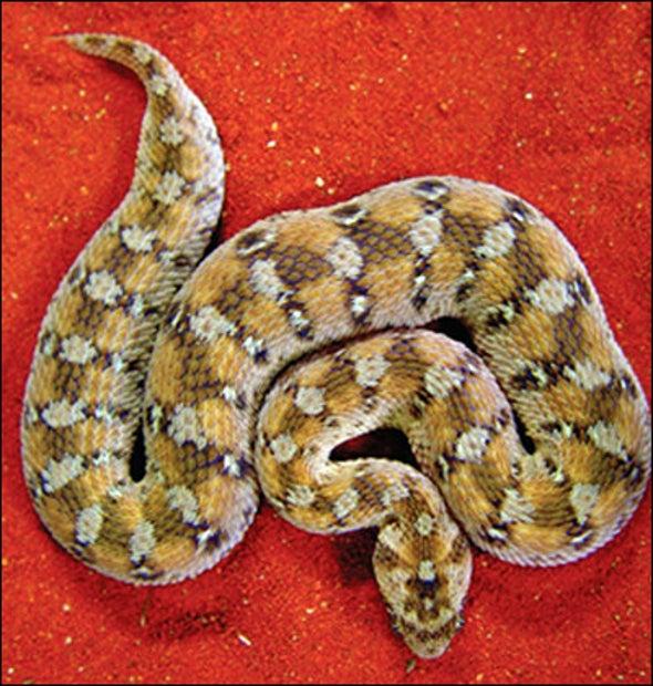 Rodent Virus Stole Snake DNA