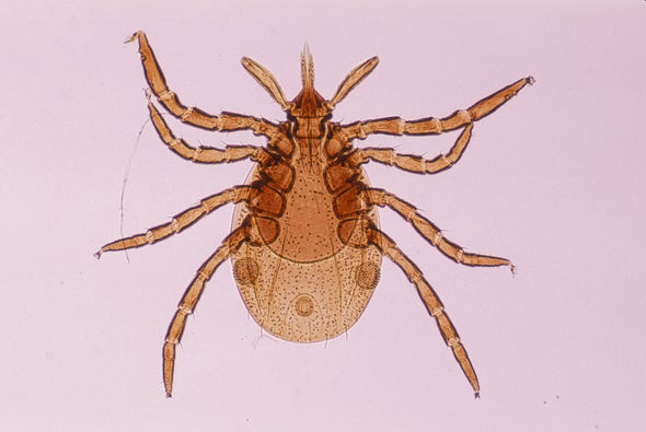 Vaccinating Mice May Finally Slow Lyme Disease