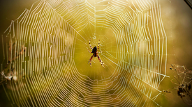 Sticky Science: the Evolution of Spider Webs