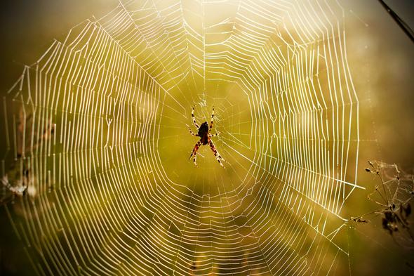 Sticky Science: the Evolution of Spider Webs