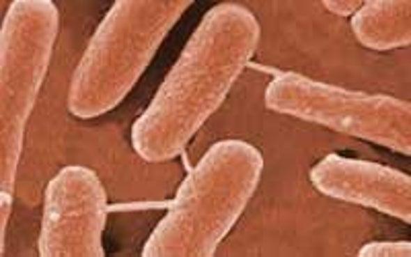 <i>E. coli</I> Provides Clues to Colon Cancer Treatment