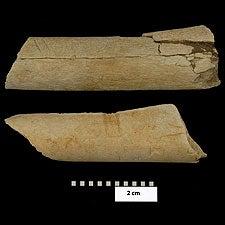 Ancient Cut Marks Reveal Far Earlier Origin of Butchery