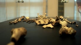 """Fossil Sleuthing Hints at What Killed """"Lucy,"""" Our Iconic Ancestor"""