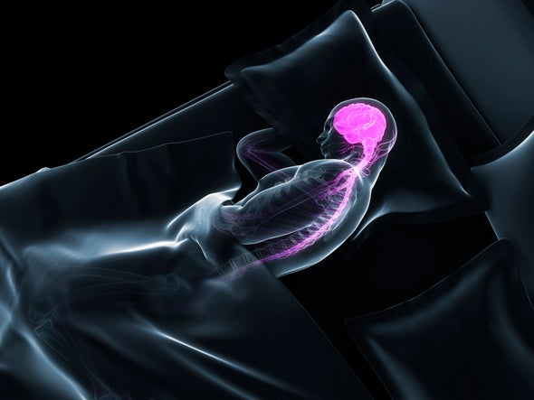 What Happens in the Brain During Sleep?