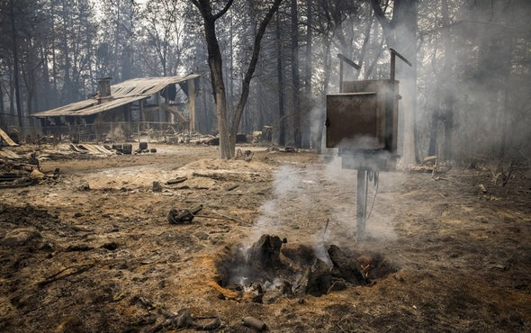 From Pine Cones to Hobbit Holes, Mimicking Nature Can Help Humans Adapt to Wildfires