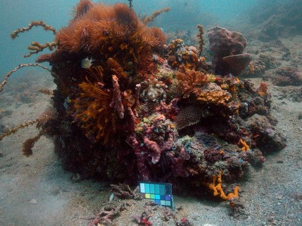 Sea-thru Brings Clarity to Underwater Photos