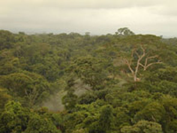 Rain Forests Release Carbon Dioxide in Response to Warmer Temperatures