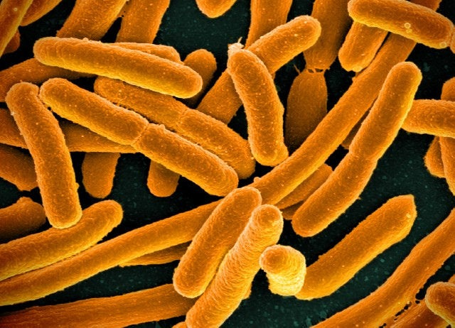 Microbial DNA in Human Body Can Be Used to Identify Individuals