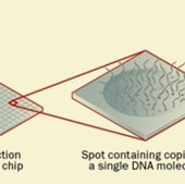GENE CHIPS AT WORK