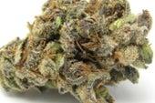 The Science behind the DEA's Long War on Marijuana