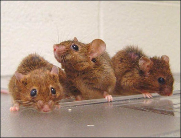 Long-Lived Mice