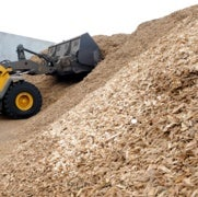 Congress Says Biomass Is Carbon Neutral, But Scientists Disagree