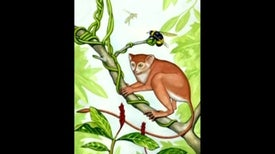 Fossil Discovery Casts New Light on Origin of Primates