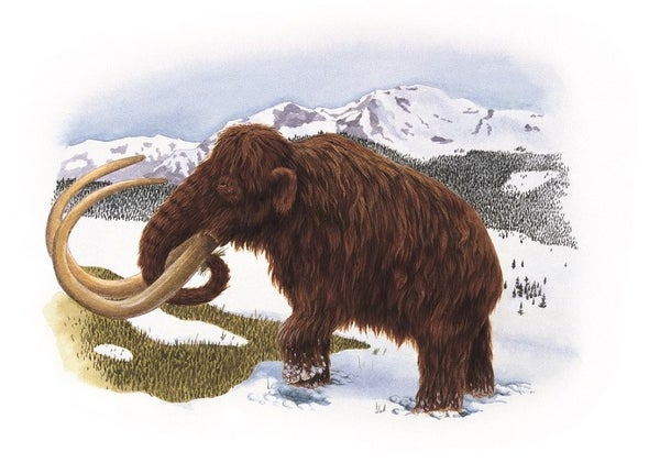 Menu Featured Mammoth but Diners Were Mocked
