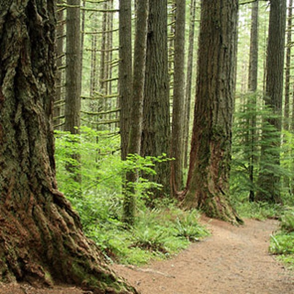 Regrowing Forests Could Provide Climate Change Help