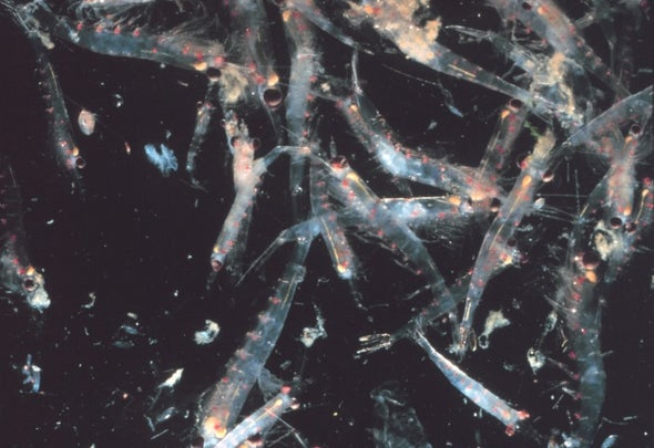 Krill Are Disappearing from Antarctic Waters