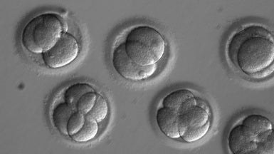 Embryo Gene-Editing Experiment Reignites Ethical Debate