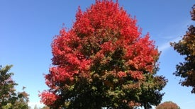 Fall Foliage Timing Comes into Clearer Focus