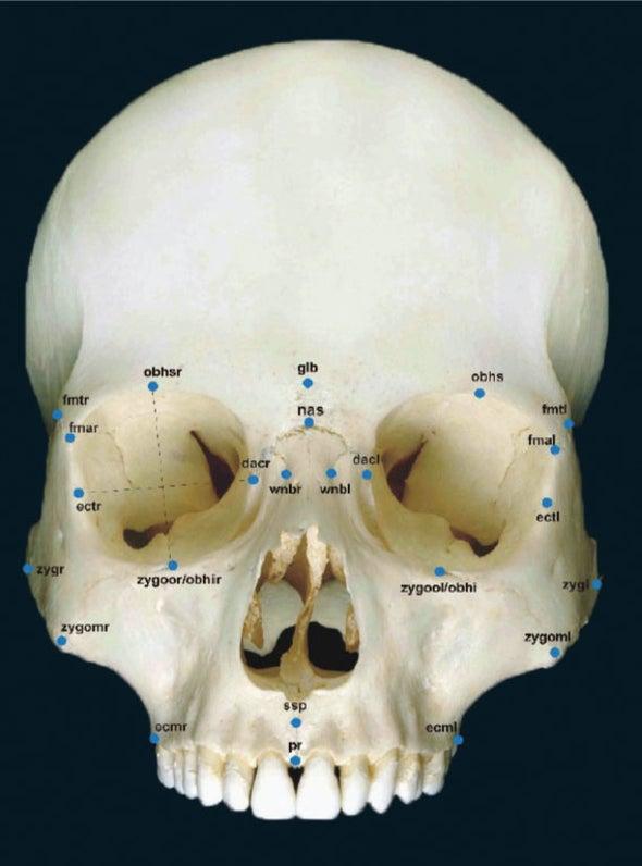 ID'ing a Skull Just Got Easier