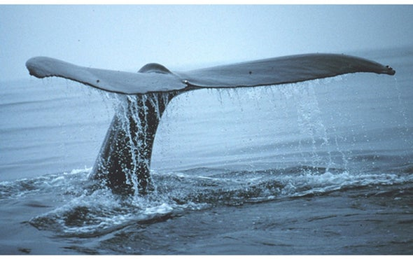 Whales Keep Carbon out of the Atmosphere