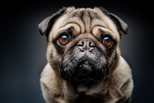 Domestication Made Dogs' Facial Anatomy More Fetching to Humans