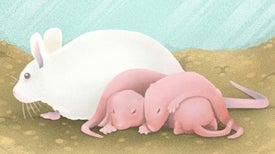 Can Female Mice Improve Autism Research?