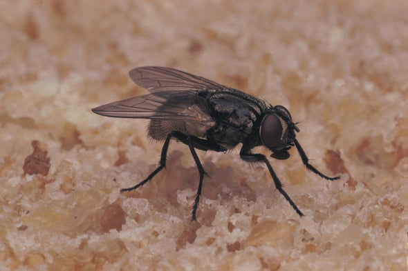 Warming Climate Implies More Flies—and Disease