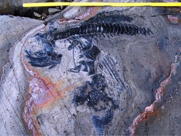 Ichthyosaur Graveyard Discovered beneath Glacier