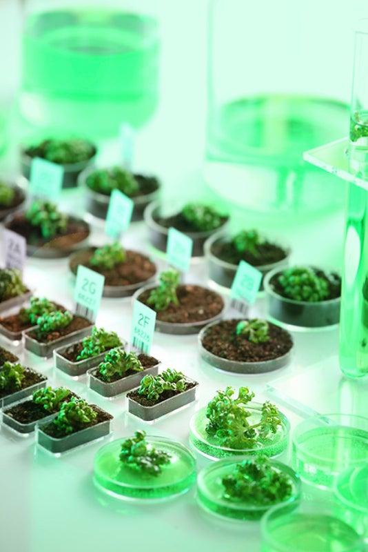 CRISPR Could Help Gene-Edited Crops Bypass Biosafety Regulation