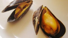 Mussels Lose Footing in More Acidic Ocean